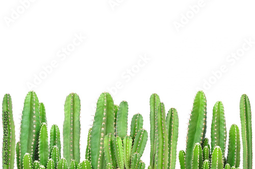 Spoed Foto op Canvas Cactus Cactus on isolated background