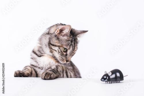 Fotografie, Tablou  Katze mit Maus ist neugierig