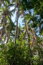 Isla Iguana Forest