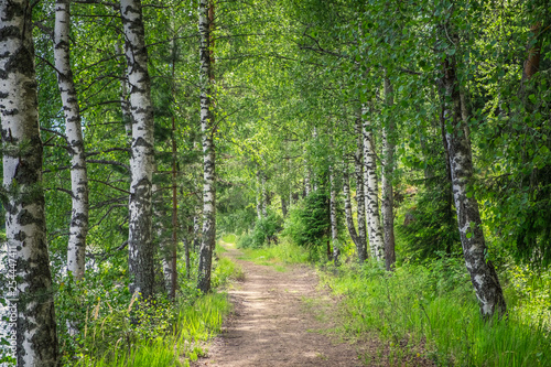 Poster Route dans la forêt Idyllic path in forest with lush birches at spring day in Finland