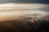 Samotne jesienne drzewo we mgle