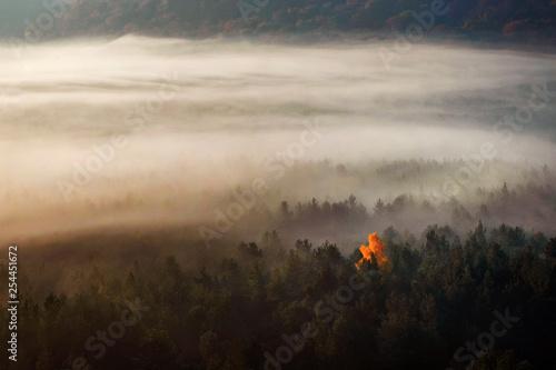 Samotne jesienne drzewo we mgle - fototapety na wymiar
