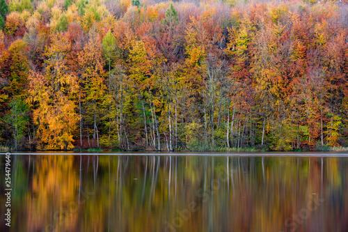Valokuva  Herbstliche Bäume spiegeln sich im See, Uklei, Eutin, Schleswig-Holstein