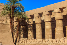 Palm Trees In Karnak Temple Complex In Luxor, Egypt