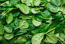 Top View On Fresh Organic Spinach Leaves. Healthy Green Food And Vegan Background.