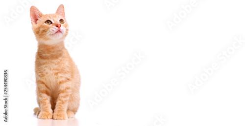 ginger kitten cat Fototapet