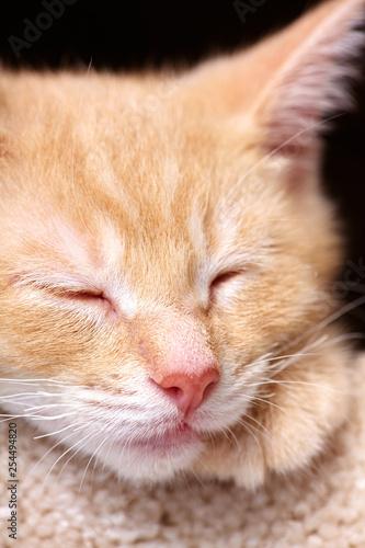 śpiący imbirowy kot