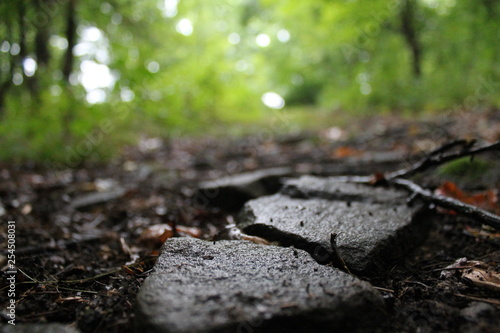 Fotografija Stepping Stones - Nature Photography