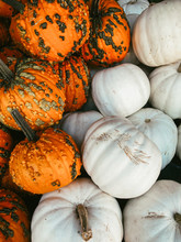 Pile Of Orange And White Pumpkins