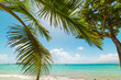 Palm tree by La Datcha turquoise sea in Guadeloupe