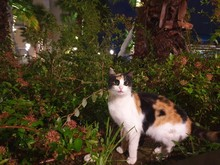 Calico Cat Beside Green Leaf Plant During Daytime