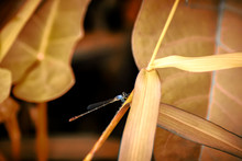 Brown Winged Insect