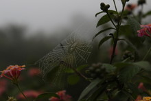 Close-up Photography Of Spider Web