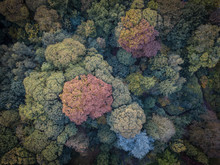 Aerial View Photography Of Green Forest