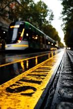 Grey Transit Under Green Trees