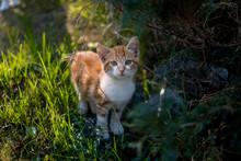 Kitten Looking At The Camera