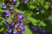 Closeup Photography Of Purple Flower And Bee