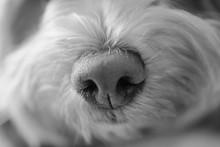Puppy Sniffs