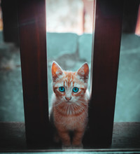 Orange Tabby Cat Standing Between Balusters