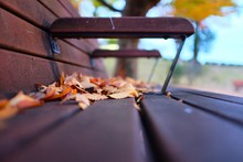 Focus Photography Of Leaves On Black Wooden Bench