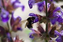 Selective Focus Of Purple Peta...
