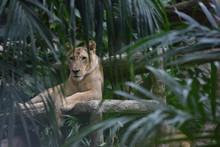 Brown Tiger Lying On Bench During Daytime