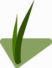 Seedlings Of Grass For Breeding In The Abstract Vector. Icon For Agriculture On The Background Of Green Rhombus.