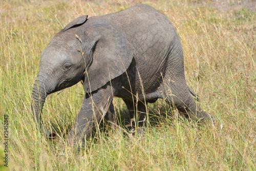 Baby Elephant in Maasai Mara