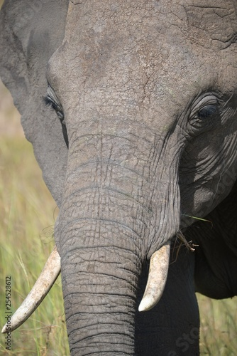Photo  Elephant portrait in Maasai Mara