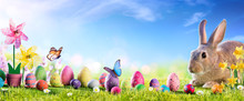 Easter - Cute Bunny With Eggs In Meadow