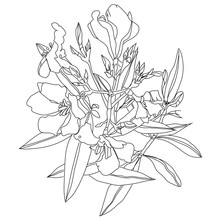Vector Flower Illustration Oleander Drawn