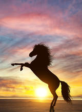 Rearing Stallion And Dramatic Dusk Sky