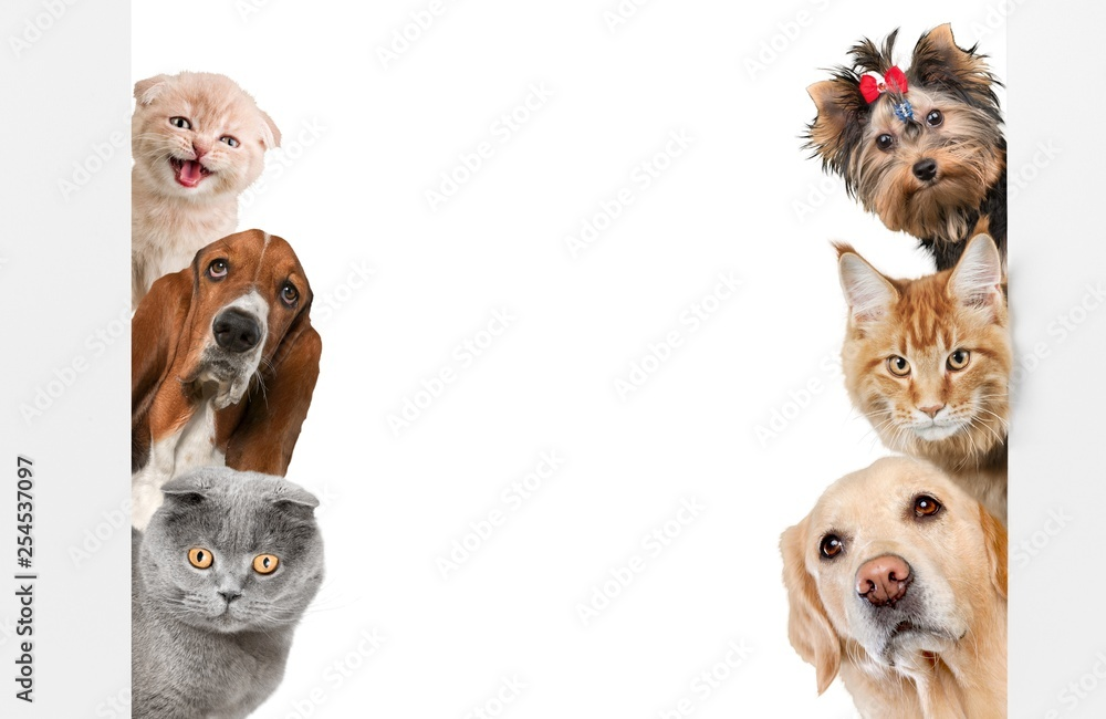Fototapeta Various cats and dogs as frame isolated on white