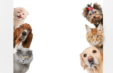 Fototapeta Pies Various cats and dogs as frame isolated on white