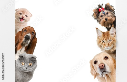 Various cats and dogs as frame isolated on white - 254537097