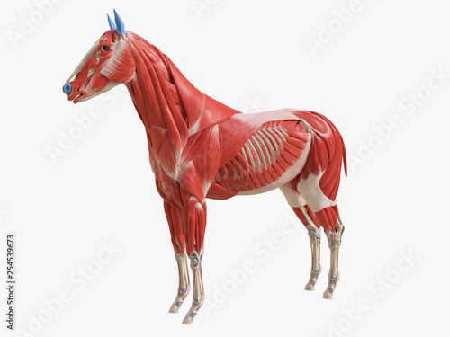 Obraz na plátně 3d rendered medically accurate illustration of the equine muscle anatomy