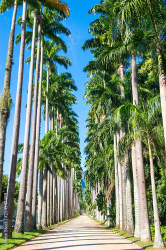Fotografía  Bright scenic view of dirt path lined by an avenue of soaring royal palm trees u