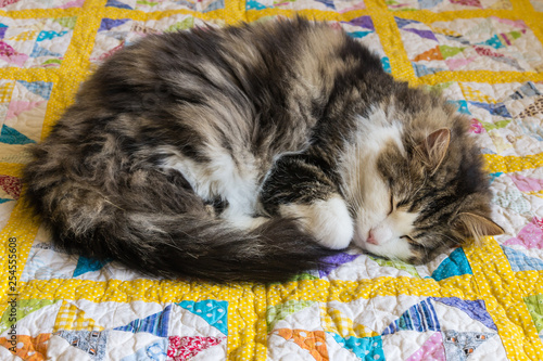Fotografie, Obraz tabby cat sleeping curled up on yellow patchwork quilt
