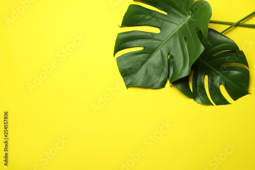 Foto auf Leinwand Gelb Schwefelsäure Flat lay composition with tropical monstera leaves and space for text on color background