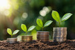canvas print picture - plant growing step  on coins. concept finance and accounting