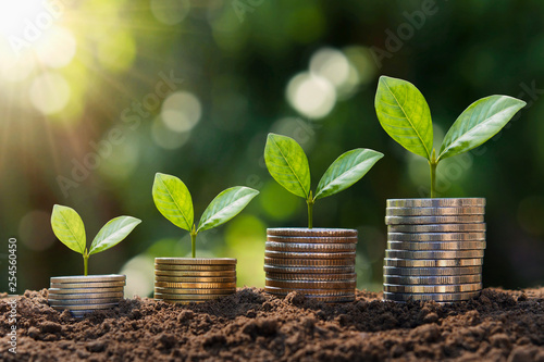 Fototapeta plant growing step  on coins. concept finance and accounting obraz