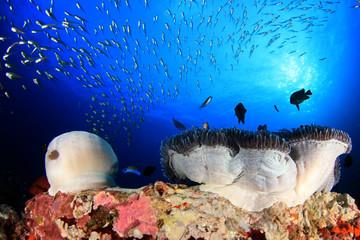 Podwodna rafa koralowa i ryby