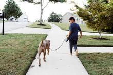 Mixed Race Boy Walking Dog