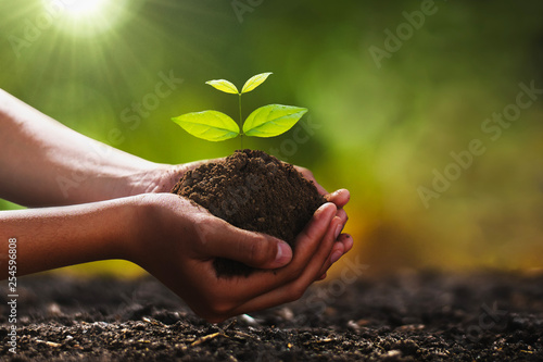 Foto op Aluminium Lente hand holding small tree for planting. concept green world