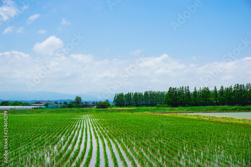 Tuinposter Groene Spring countryside. Photographed in Japan, Ishikawa Prefecture. 春の田園風景 日本の石川県で撮影