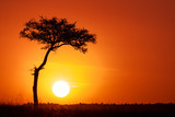 Fototapeta Sawanna - Acacia tree and the setting sun in the Masai Mara.