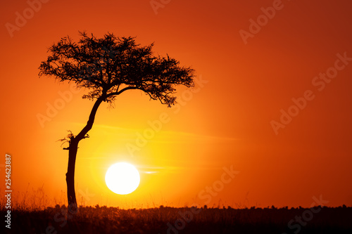 Spoed Foto op Canvas Rood traf. Acacia tree and the setting sun in the Masai Mara.