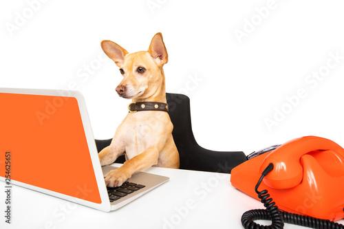 Foto op Aluminium Crazy dog boss management dogs in office