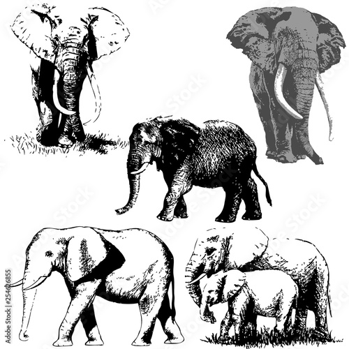 Elephant silhouette set. Vector illustration Canvas Print