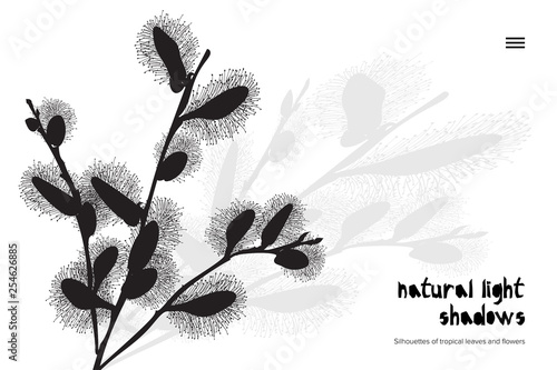 Photo Abstract banner with black pussy willow leaves shadow isolated on white background